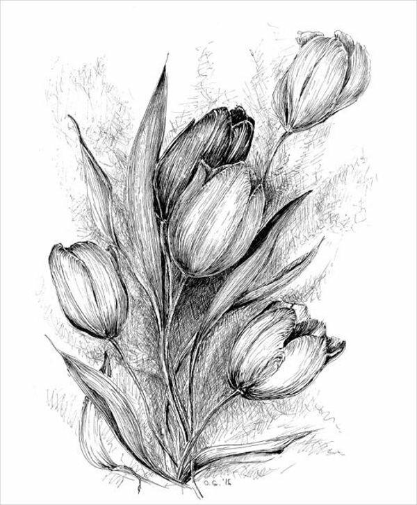 ряд тюльпаны рисовать карандашом картинки интерес при этом