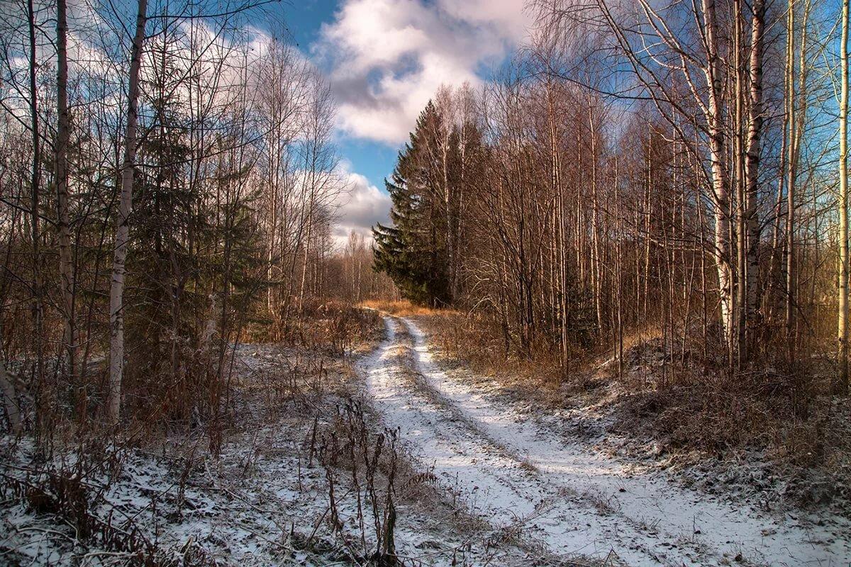 Поздняя осень зима картинки