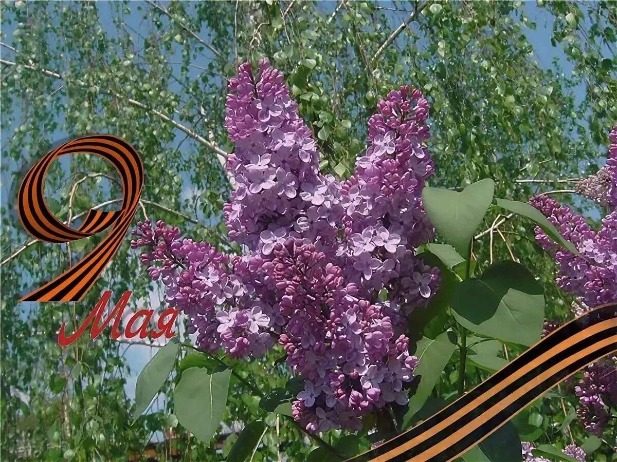 Добрым, открытки с 9 мая весна 9 мая цветы
