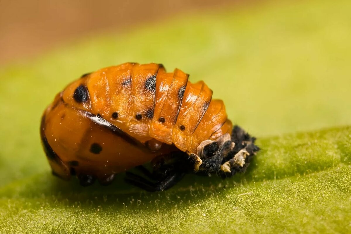 Картинки про насекомое