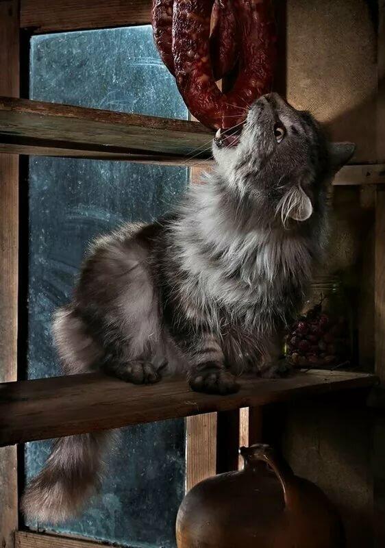 Трошки котиків вам у стрічку: gatto_puzatto