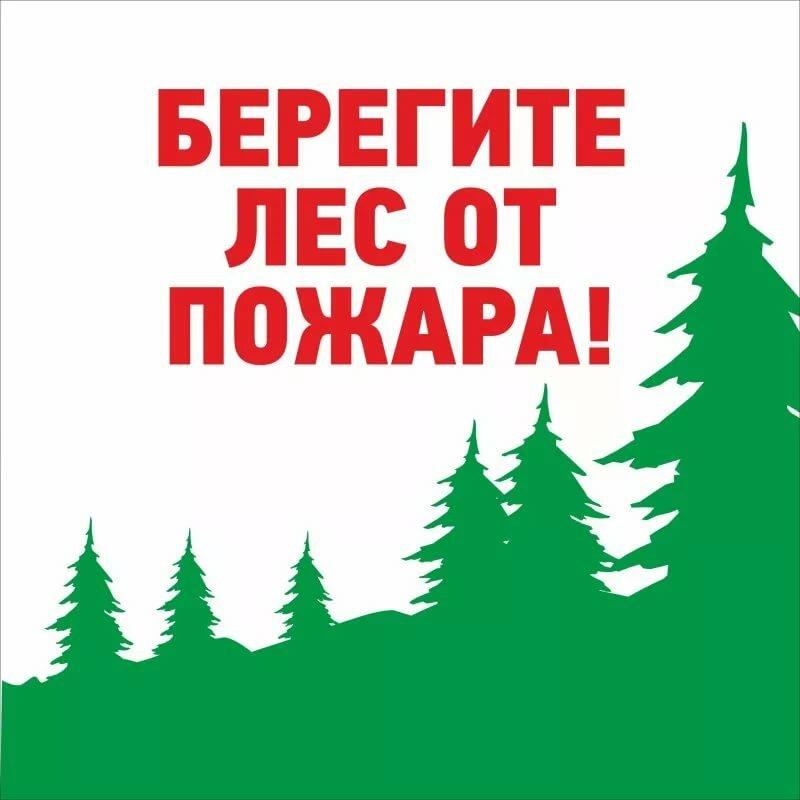 Берегите лес картинках