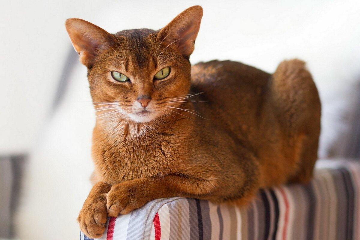 Пальмы открытка, коты фото красивые породы
