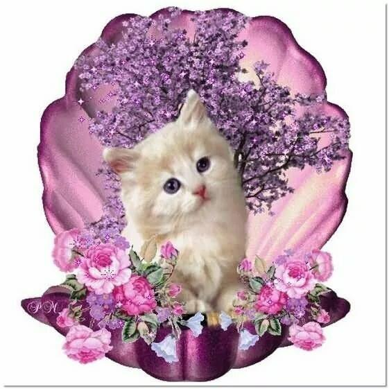 самые красивые мерцающие открытки с котятами королева ничего