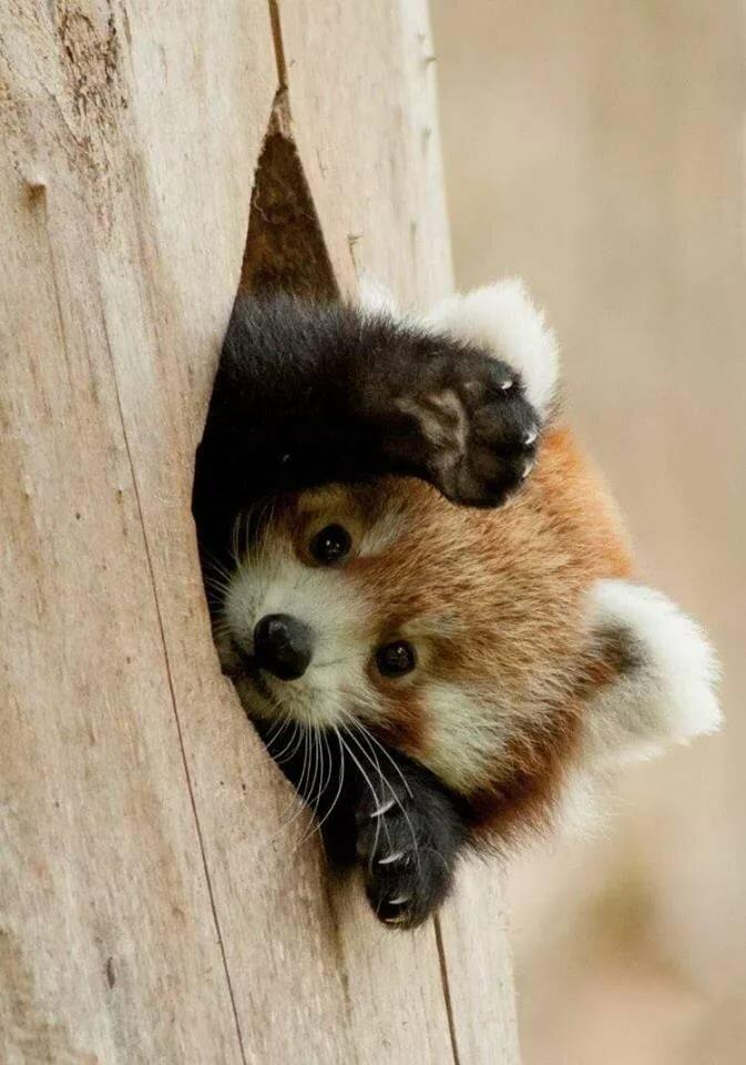 Картинка милашек животных