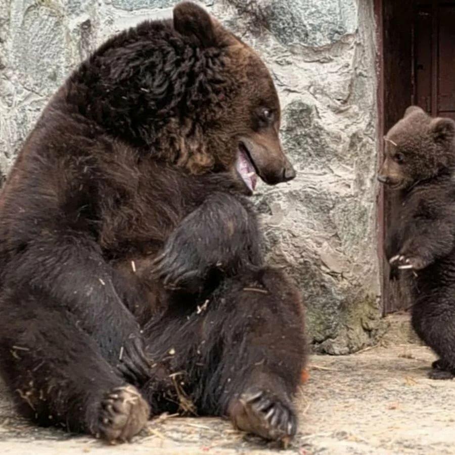 Прикольные картинки человека и медведя, отдыха