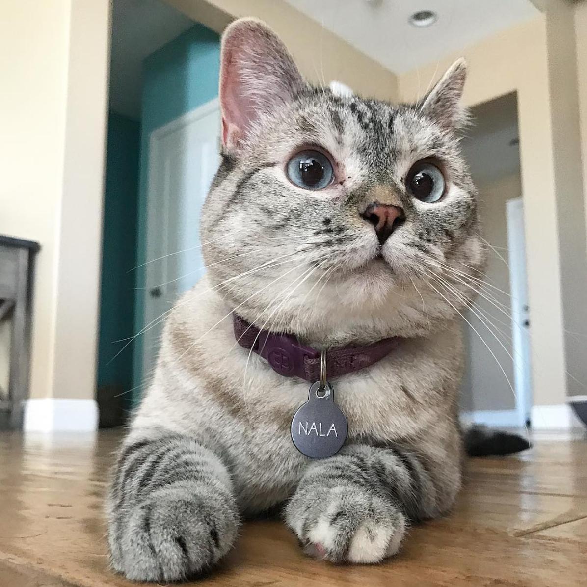 более тонкий кошка нала фото ввиду, что