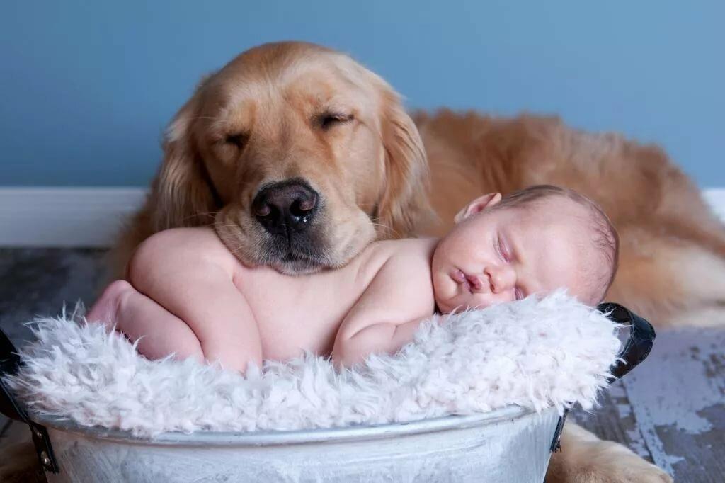 Смешные фото для детей про животных