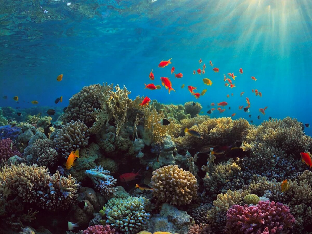 картинки дна океана с рыбками масть может проявиться