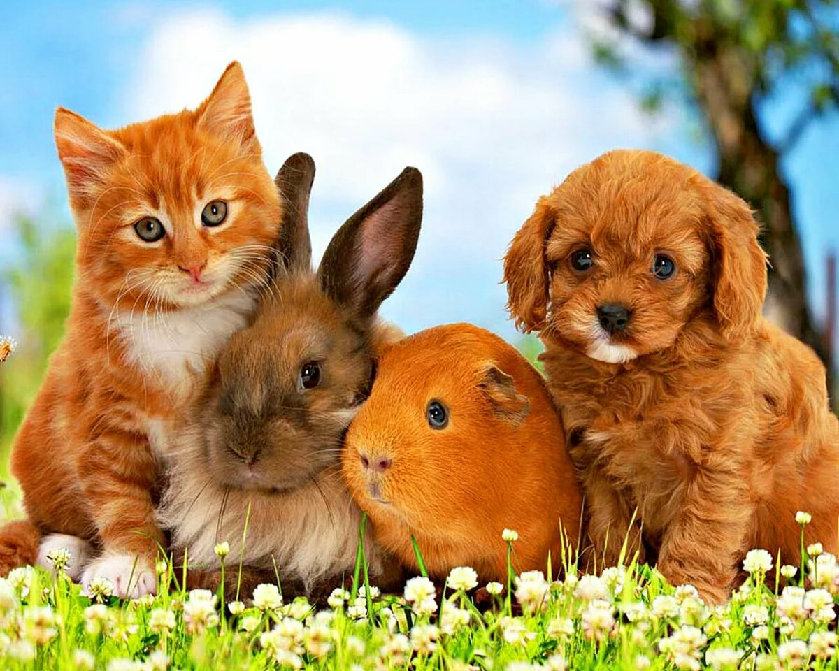 Картинки с кошечками и собачками