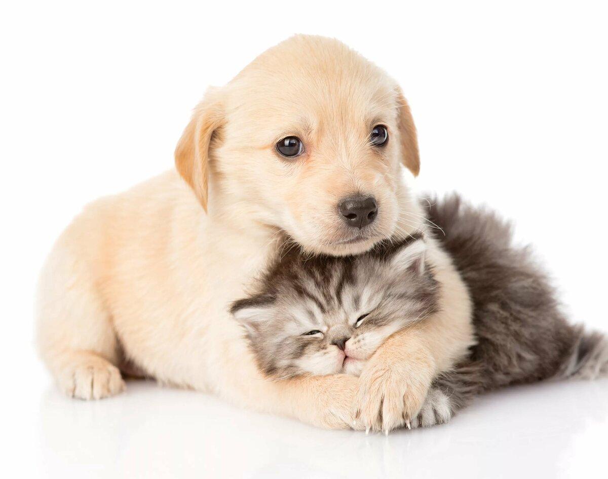 Словами днем, милые котята и щенки картинки с надписями