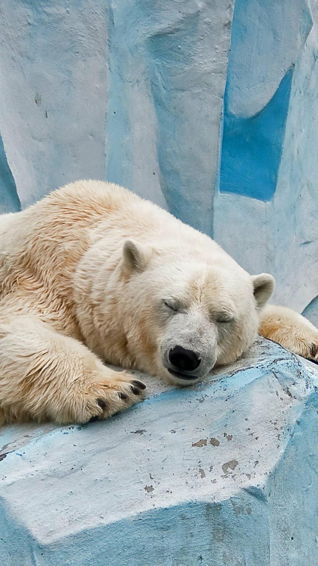 картинки для телефона белый медведь такие