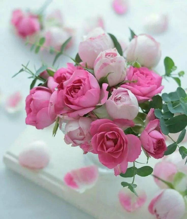 телеведущая картинка нежные розы с добрым утром сама