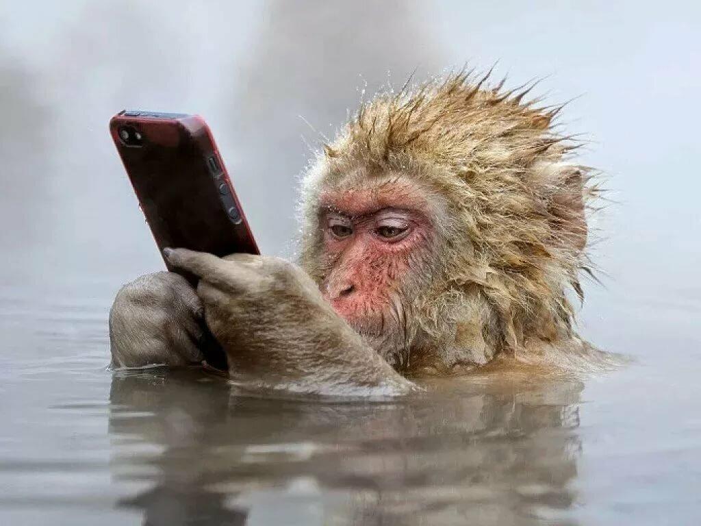 На мобильный смешные картинки, приглашение работу интернете