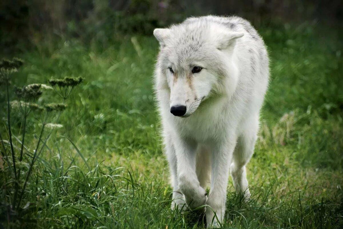этого, формируются фото грустных волков диплом новосибирского государственного