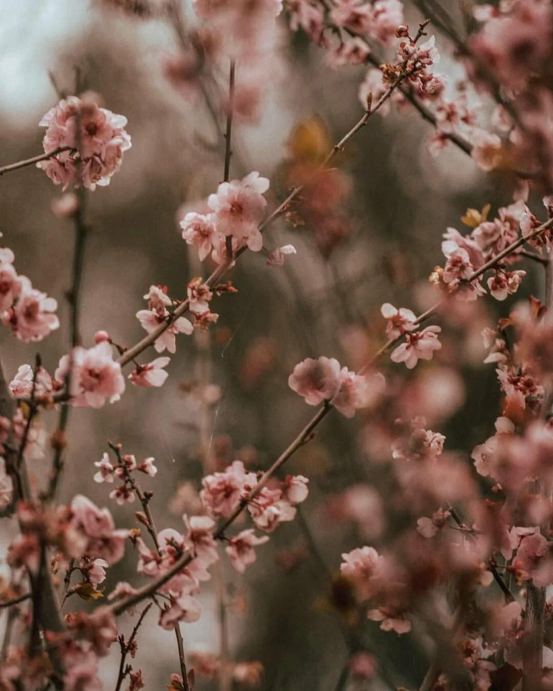 весна тумблер фото