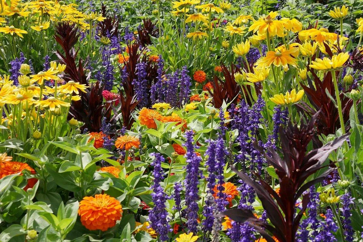 многолетние цветы для сада и огорода в картинках