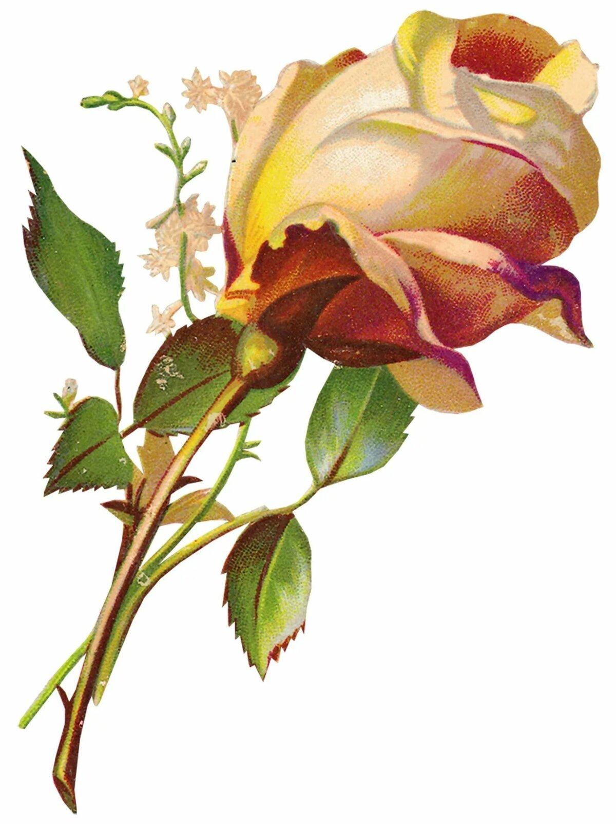 Розы открытка пнг, днем рождения лерочка