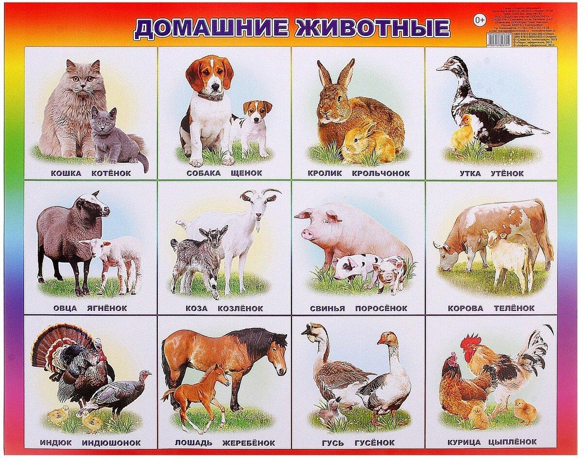 менеджеры плакаты с картинками животных оформления