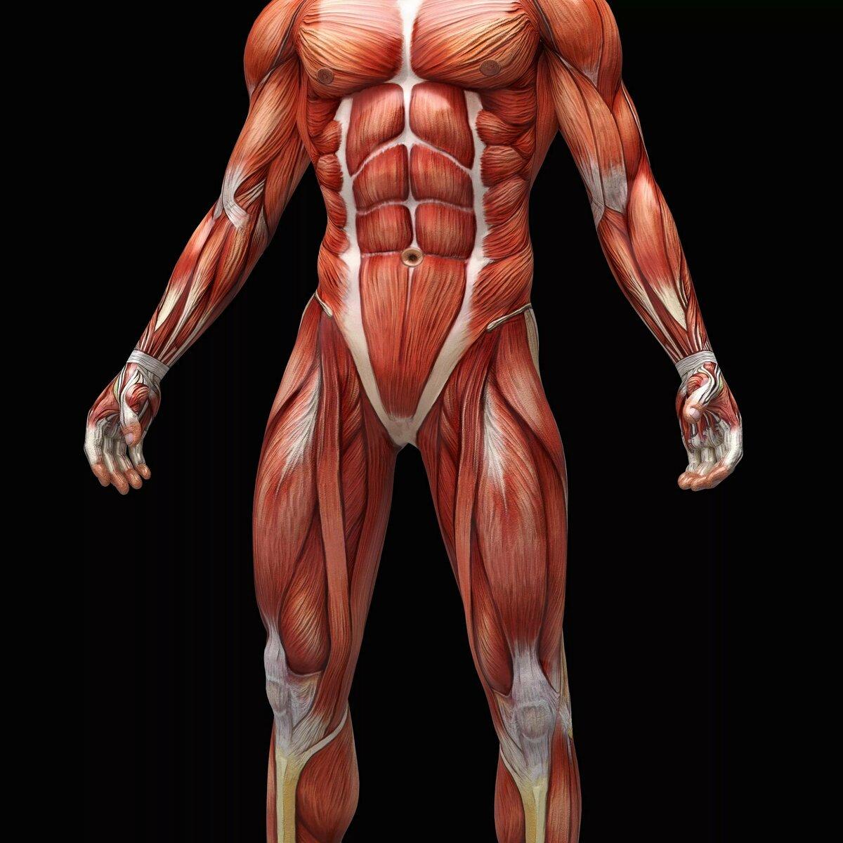 Красивое тело человека в картинках
