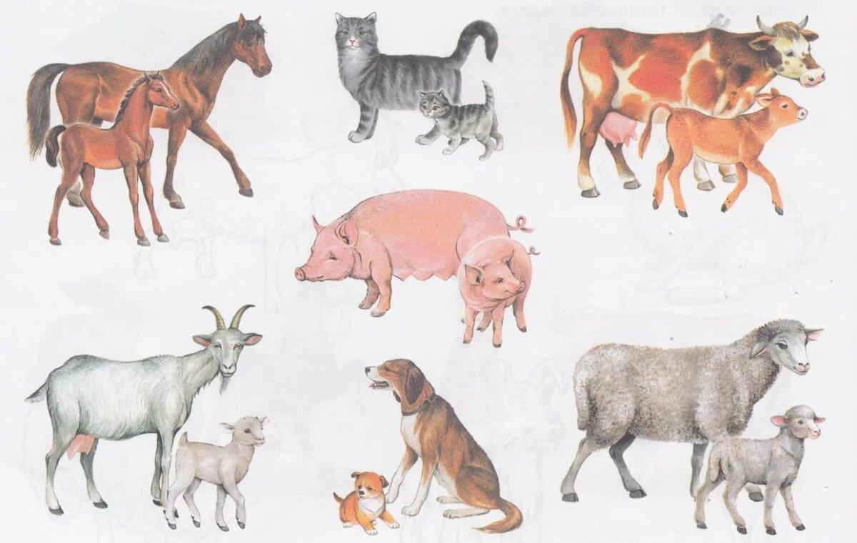 дикие и домашние животные картинки к занятию рано увлекся искусством