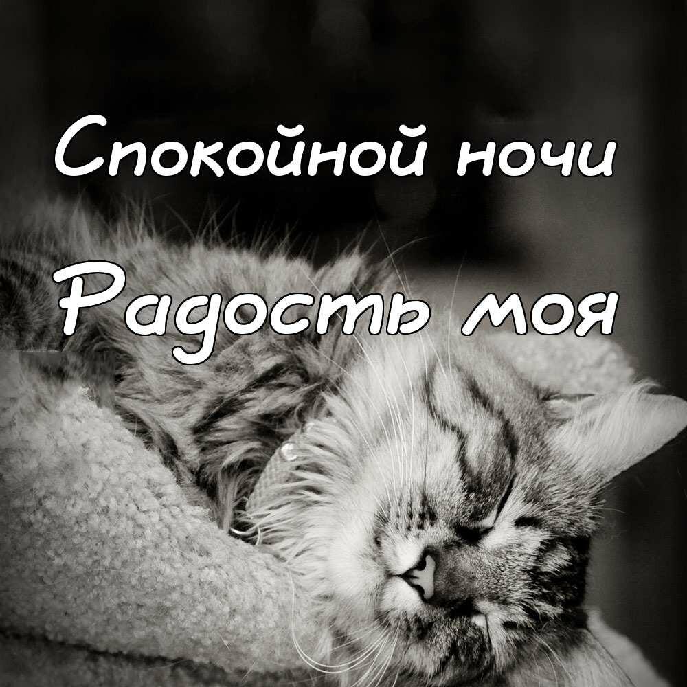 Спокойной ночи забавные картинки