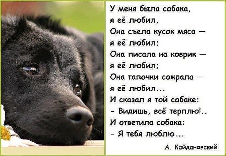 Смешные стихи про здоровье собаки
