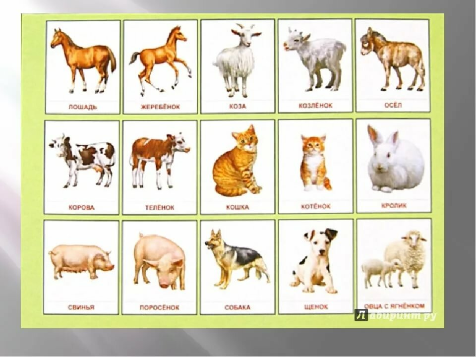 Картинки детеныши домашних животных для детей