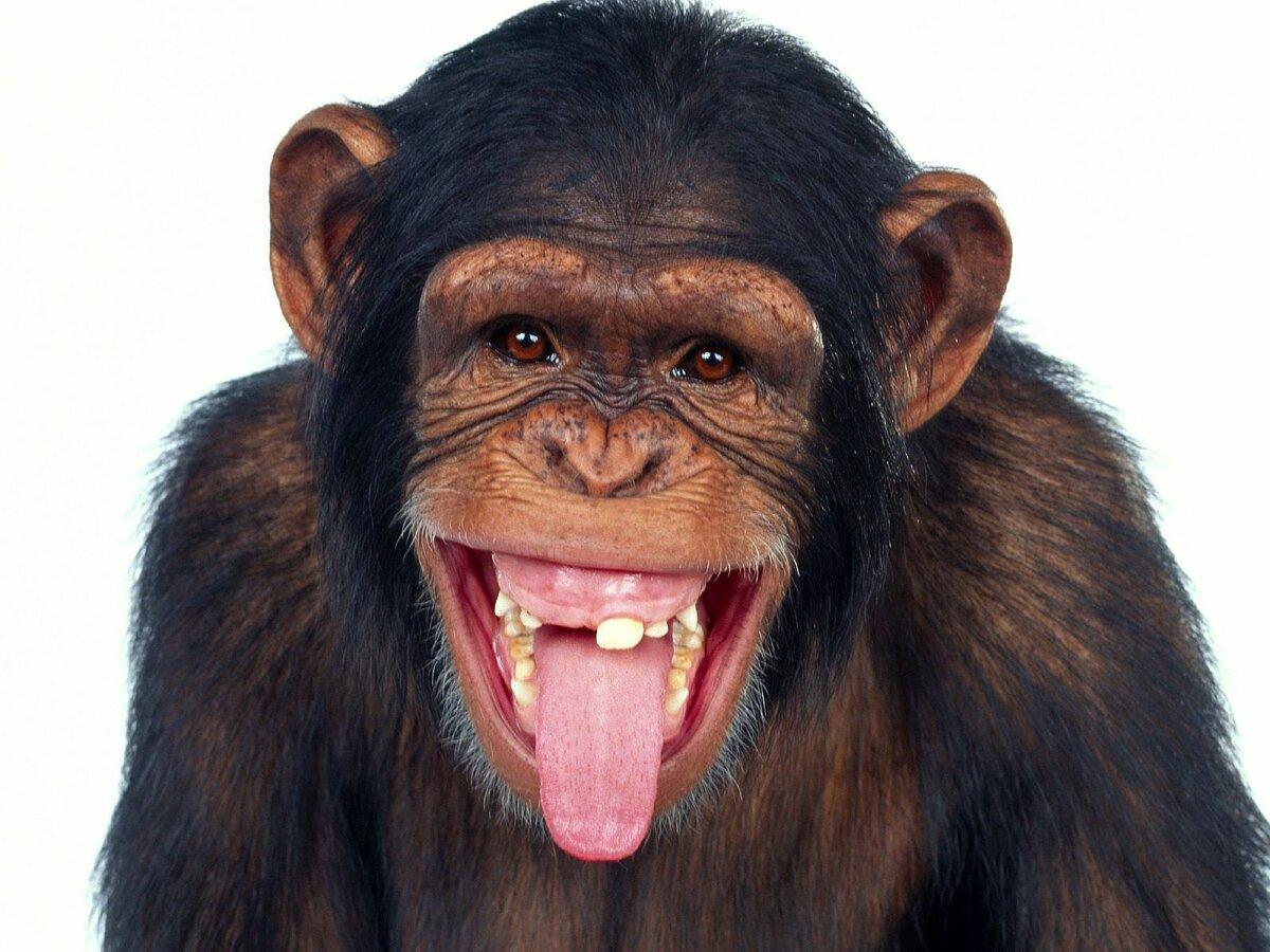 Картинка обезьян прикольные, картинка надписью картинки