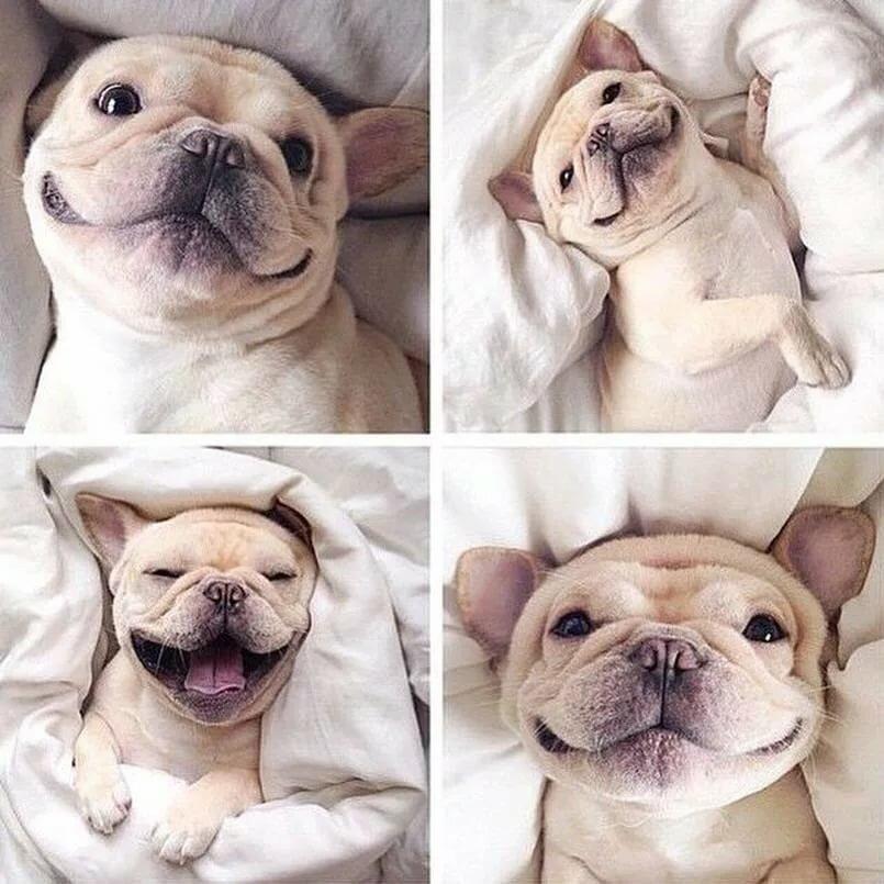 Пятницей приятных, открытки прикольные с собаками доброе утро