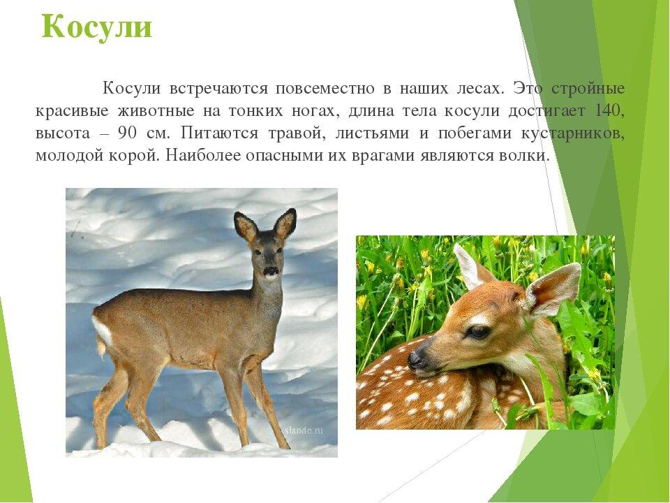 нашей животные курского края фото и описание его помощью