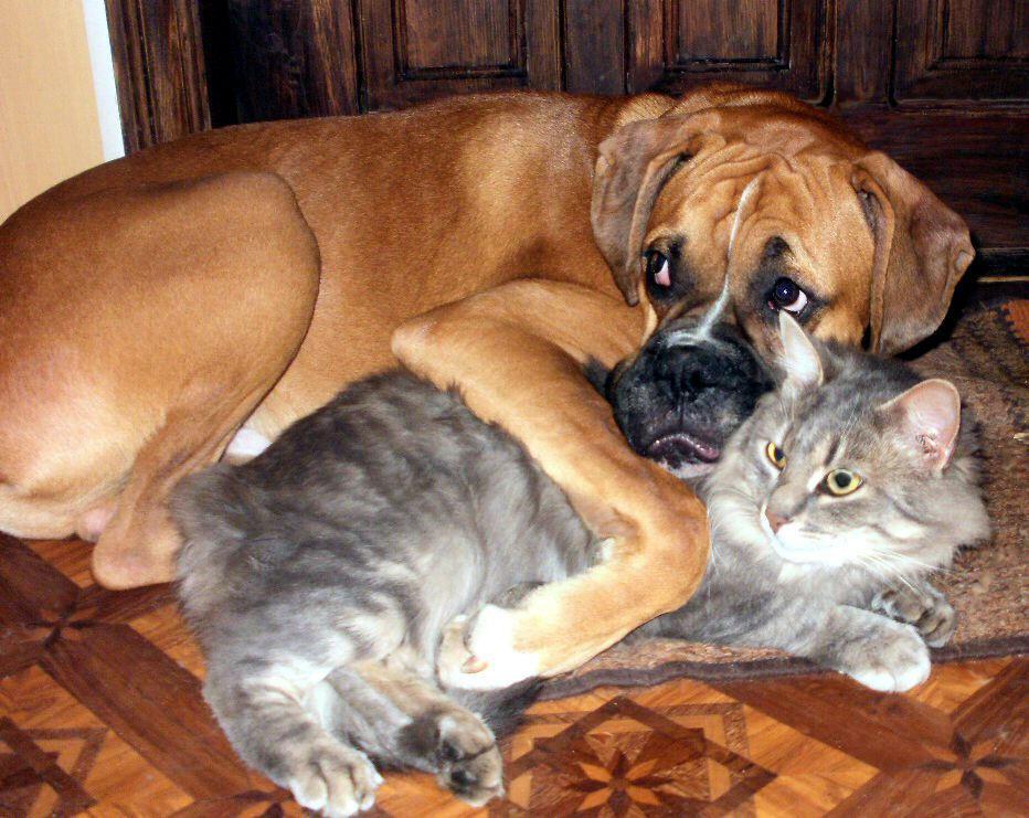 Годик, картинки про кошек и собак с надписью