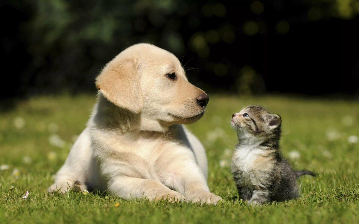 Поздравления, картинки смешных котят и щенят