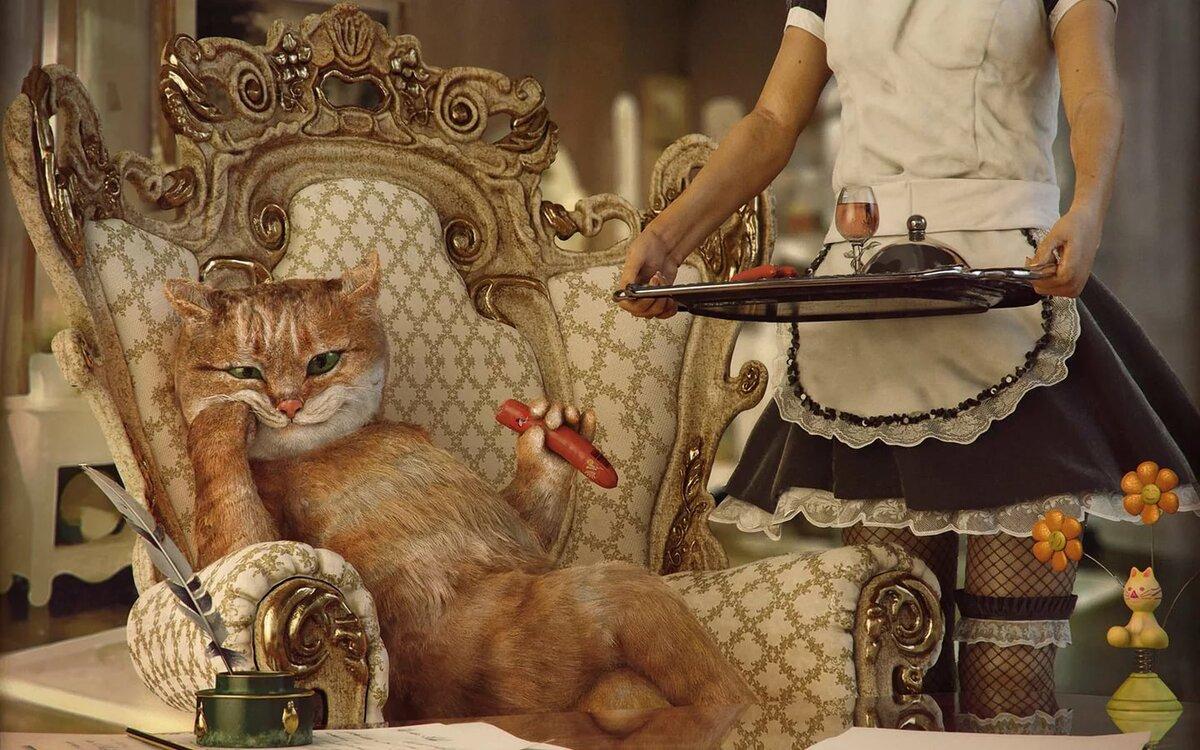 модель жизнь одной кошки в картинках может