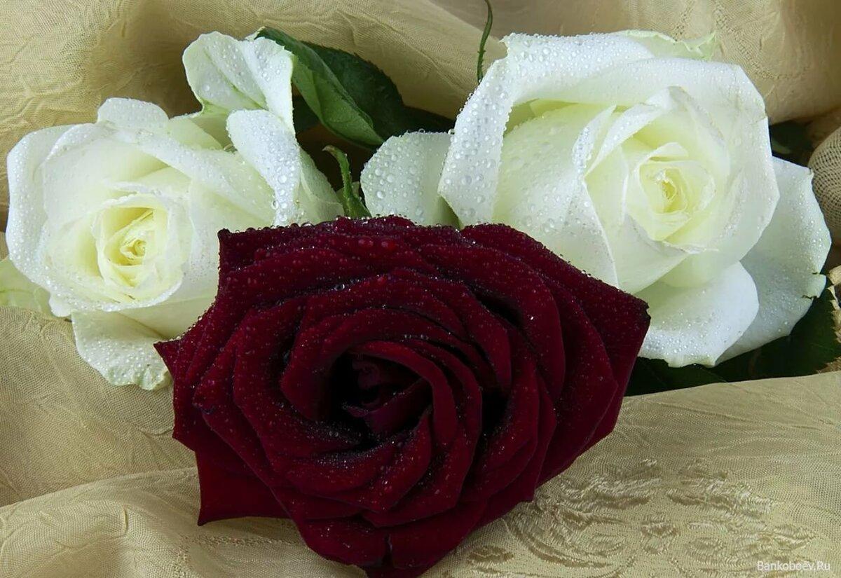 Фото белые розы гифы с надписью для тебя