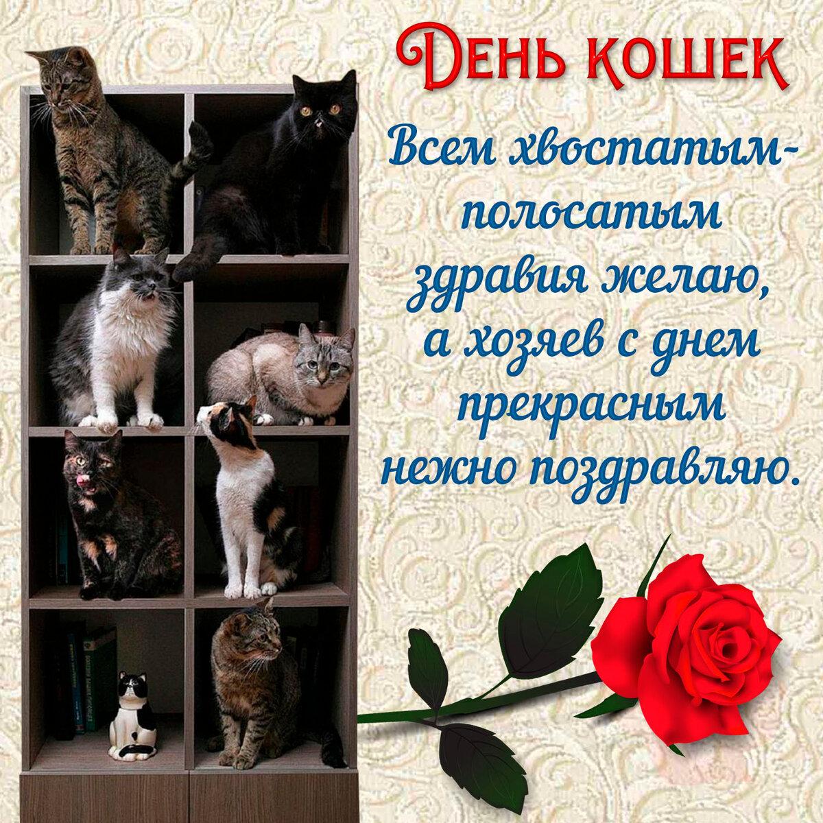 День кошек фото картинки