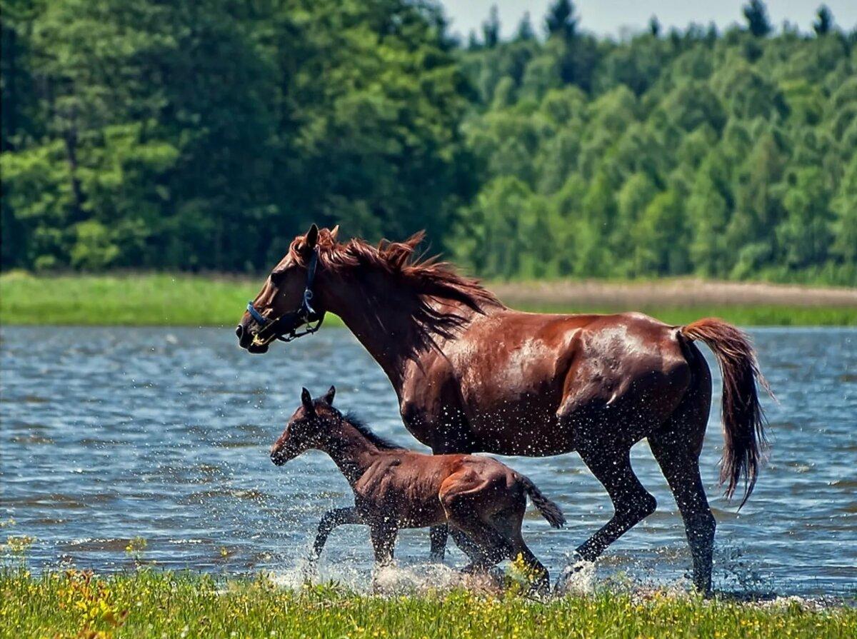 его озеро конь в картинках оригинальные новогодние