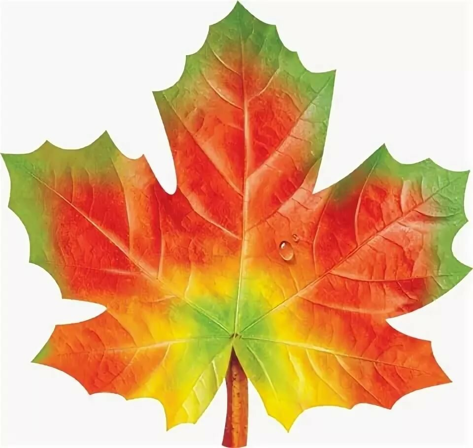 Листья для открытки шаблоны цветные, картинки