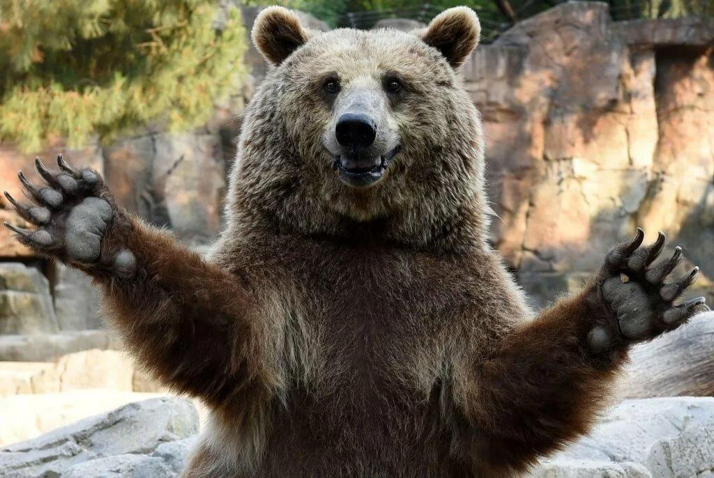 Картинки со злыми медведями