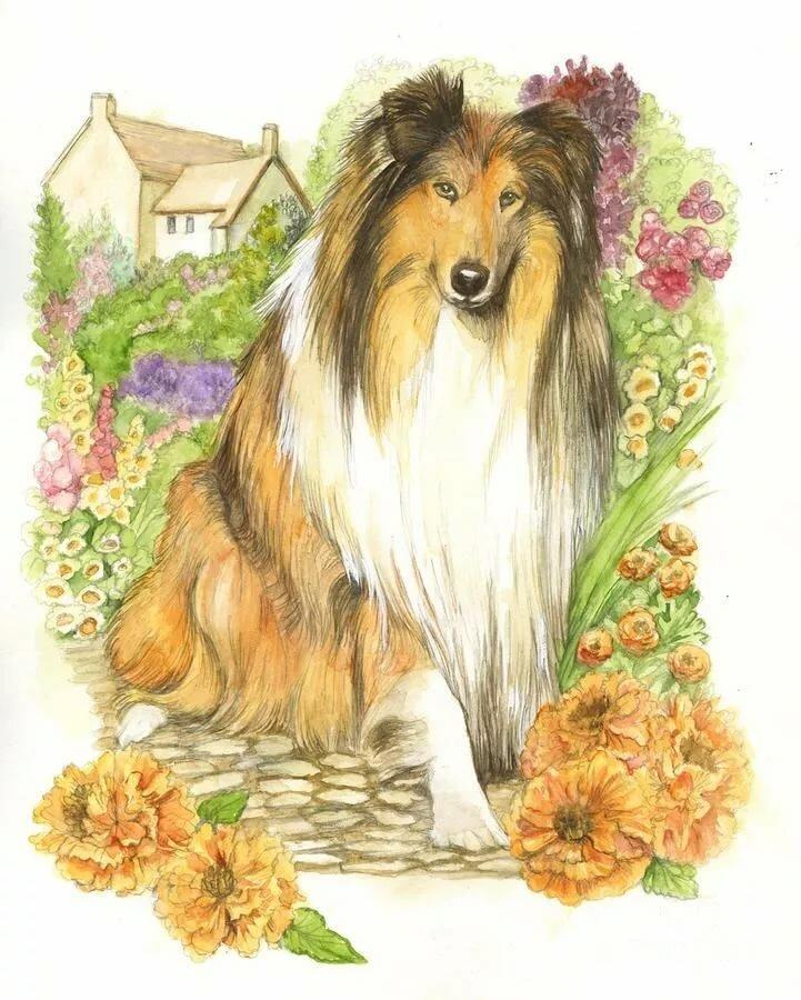 Открытки с днем рождения марине с собаками колли прикольные