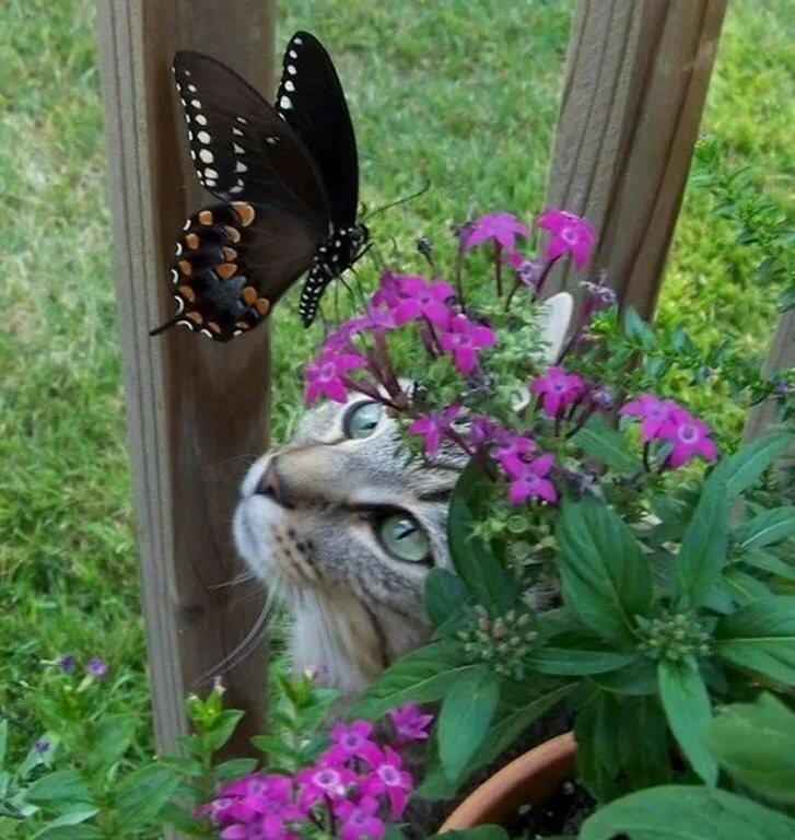Смешные картинки с бабочками