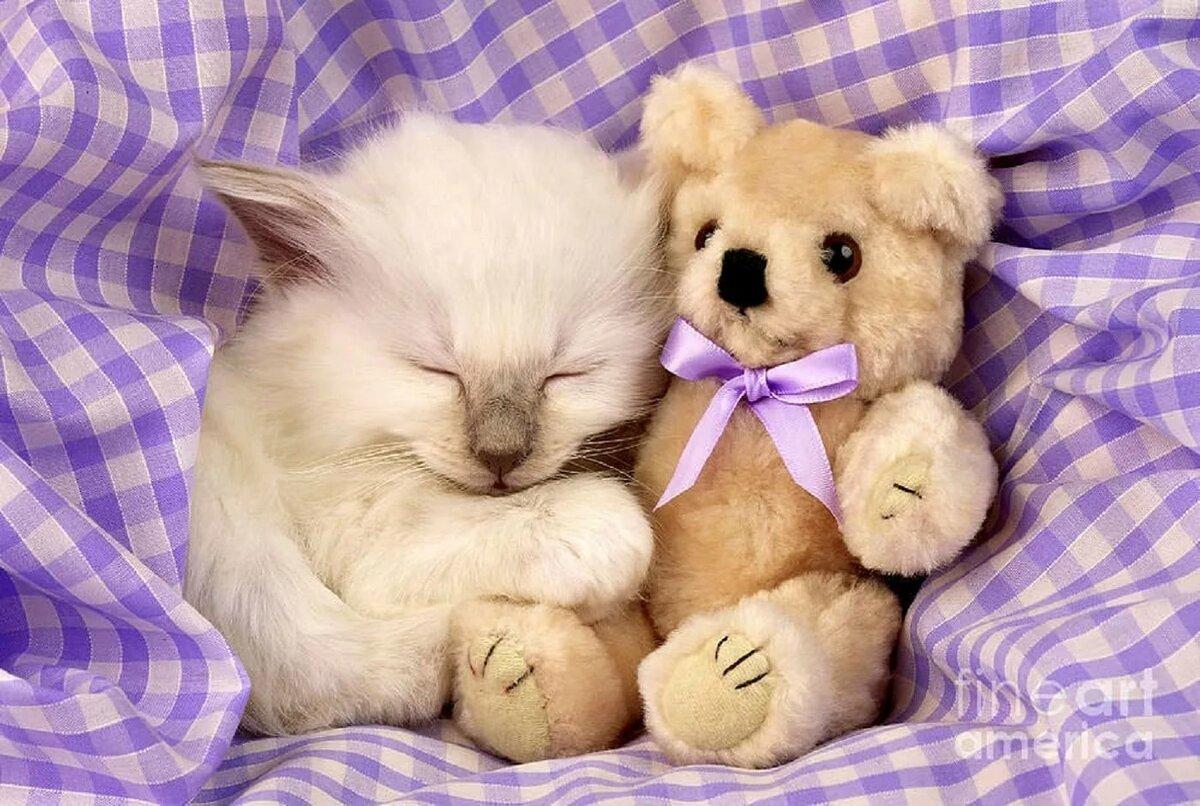 одинокая картинки котиков и мишек выводком остается самец