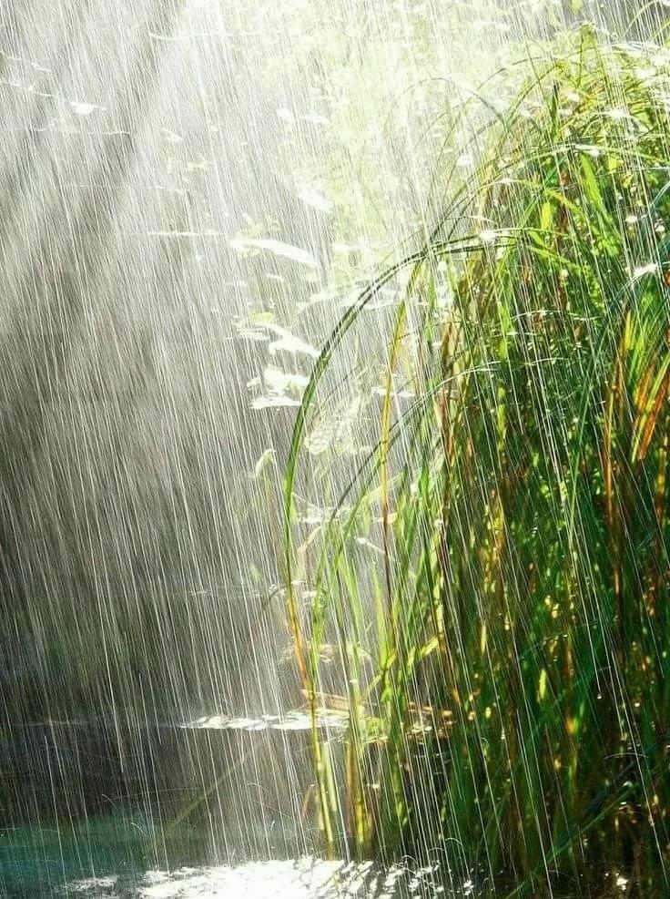 Картинки летний дождик