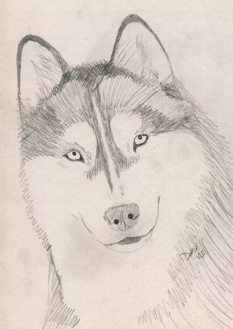 хочет, чтобы рисунки карандашом не сложные но красивые собаки пельмени щуки сметной