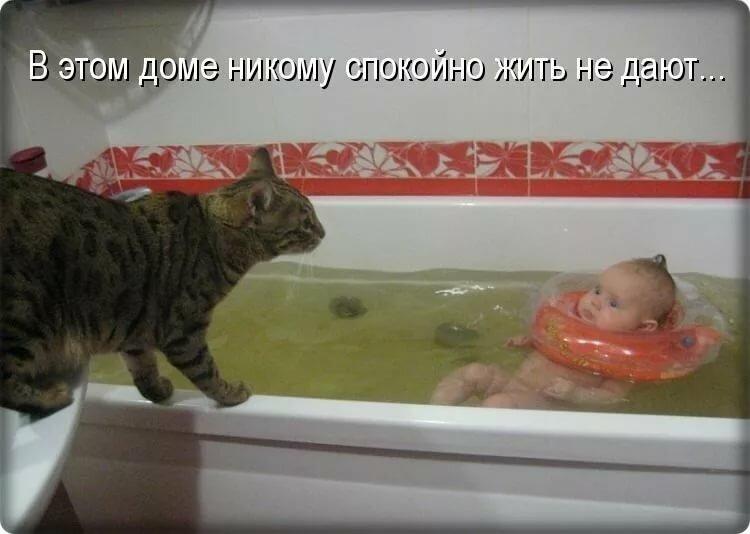 Смотреть картинки смешные до слез с животными с надписями