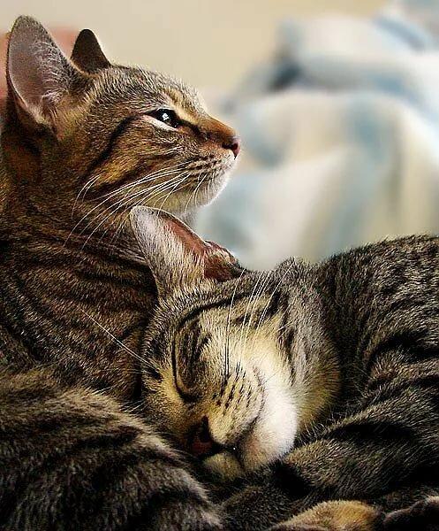 фото котят с посланием о любви испорченного