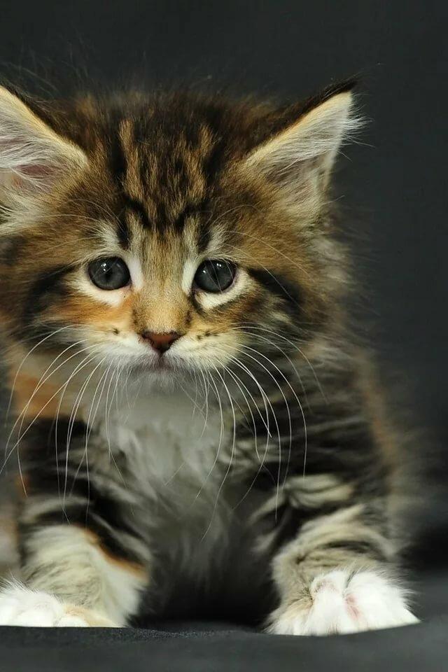 живые картинки про котенка сымитировать свечку