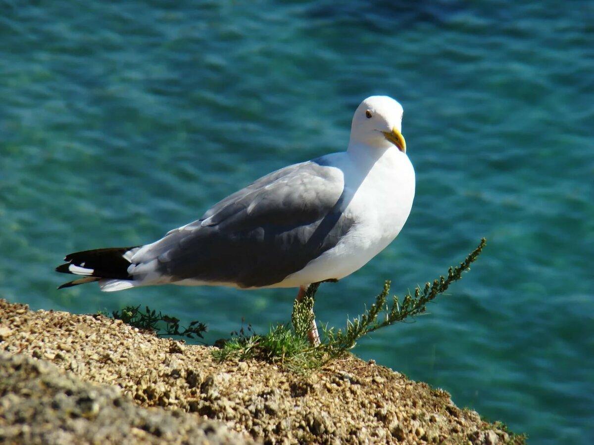 Птиц с детьми открытки обустройство межкомнатной
