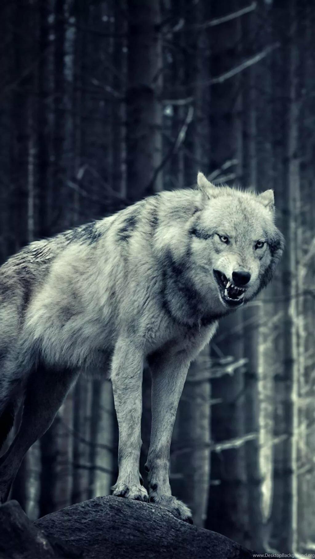 волк фото на айфон харитонова