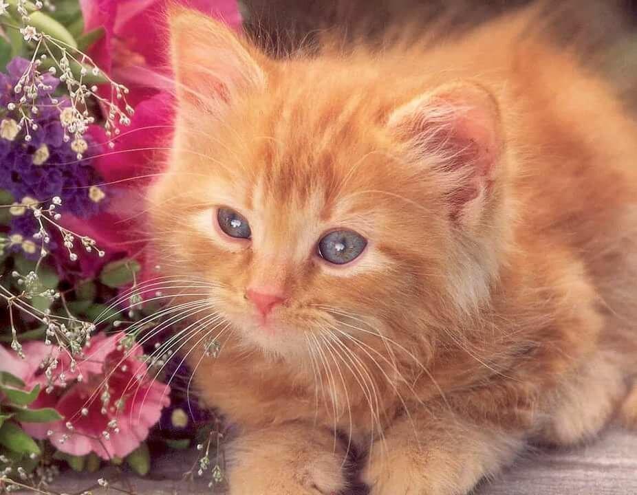 Картинки для, живые картинки коты